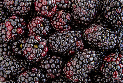 Fresh Blackberries Print by Teri Virbickis