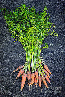 Garden.gardening Photograph - Fresh Carrots From Garden by Elena Elisseeva