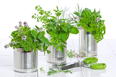Fresh Herbs In Recycled Cans Print by Amanda And Christopher Elwell