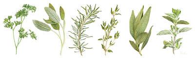Culinary Drawing - Fresh Herbs by Paula Pertile