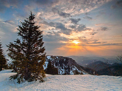 Pine Trees Photograph - Fresh Morning by Davorin Mance
