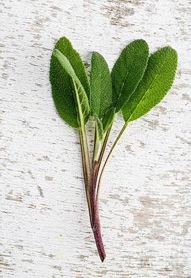 Herbal Photograph - Fresh Sage by Nailia Schwarz