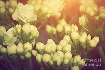 Anniversary Photograph - Fresh Spring Flowers Vintage Style by Michal Bednarek