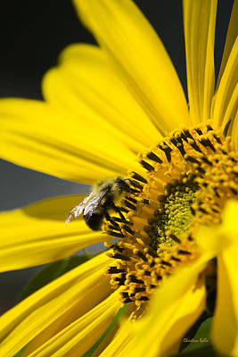 Sunflower And Bee Print by Christina Rollo