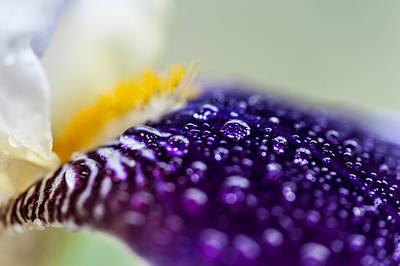 Fresh Touch. Secret Life Of Iris Print by Jenny Rainbow