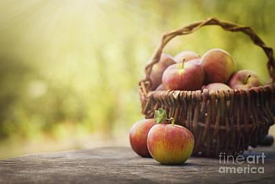 Freshly Harvested Apples Print by Mythja  Photography