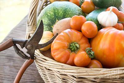 Freshly Harvested Vegetables Print by Mythja  Photography