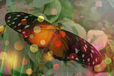 Photograph - Friend Butterfly by Shirley Sirois