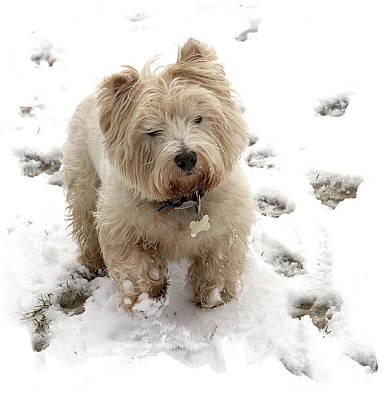 Igor Baranov Photograph - Friendly Terrier by Igor Baranov