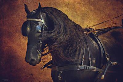 Horse And Cart Photograph - Friesian Under Harness by Lyndsey Warren