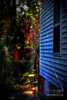 Flying Spider Photograph - Fright Night by Skip Willits