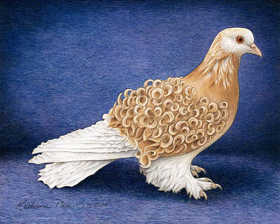 Pigeon Drawing - Frillback Pigeon by Katherine Plumer