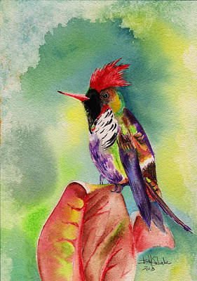 Brush.media Drawing - Frilled Coquette Lophornis Magnificus by Isabel Salvador