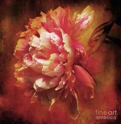 Frilled Splendor Print by Wobblymol Davis