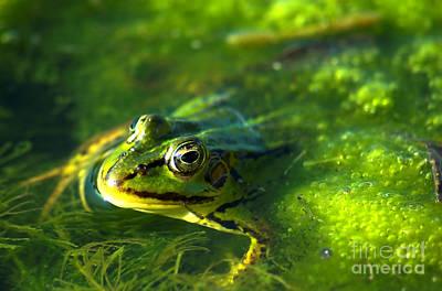 Normal Photograph - Frog by Michal Bednarek