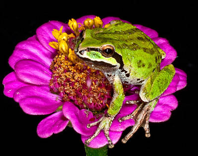 Frog  On Flower Print by Jean Noren