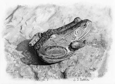 White Drawing - Frog On Rock by Sarah Batalka