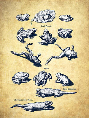 Frogs Digital Art - Frogs - Historiae Naturalis - 1657 - Vintage by Aged Pixel