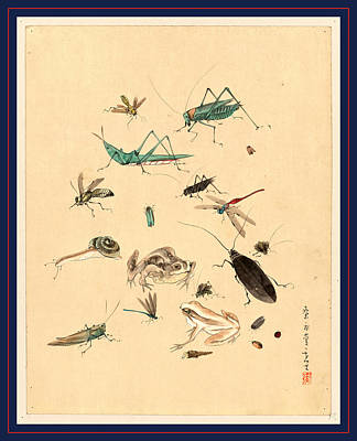 Grasshopper Drawing - Frogs Snails And Insects, Including Grasshoppers Beetles by Japanese School