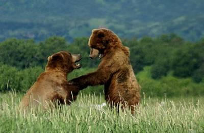 Prints Of Alaska Photograph - Frolicking Grizzly Bears by Patricia Twardzik