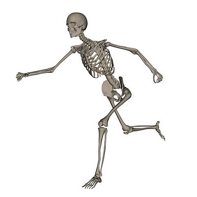 Human Skeleton Photograph - Front View Of Human Skeleton Running by Elena Duvernay