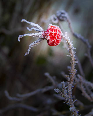 Frosted Print by Jean Noren