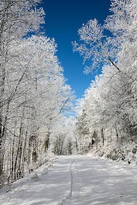 Frosted Winter Print by John Haldane