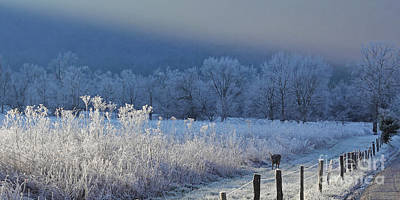 Frosty Cades Cove Shoot Print by Douglas Stucky
