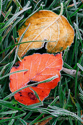Crystal Photograph - Frosty Leaves by Elena Elisseeva