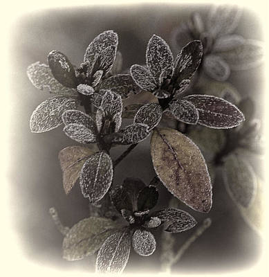 Frosty Leaves Print by Ron Roberts