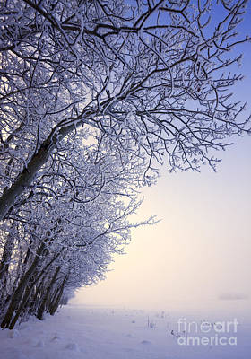 Alberta Prairie Landscape Photograph - Frosty Pasture by Dan Jurak