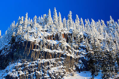 Mt Rainier National Park Photograph - Frosty Trees by Inge Johnsson
