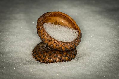 Winter Scenes Photograph - Frozen Acorn Cupule by Paul Freidlund