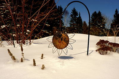 Frozen Garden Print by Danielle  Broussard