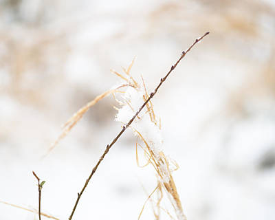 Frozen Grass And Twig Print by David Waldo