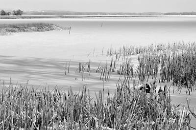 Wintry Landscape Photograph - Frozen Lake And Ice Coated Bullrushes by Louise Heusinkveld