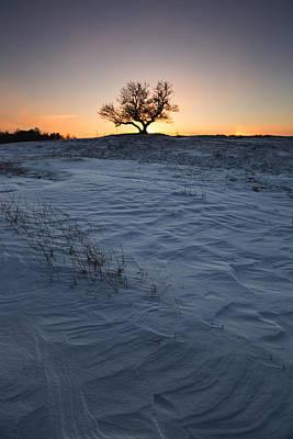 Frozen Tree Of Wisdom Print by Aaron J Groen
