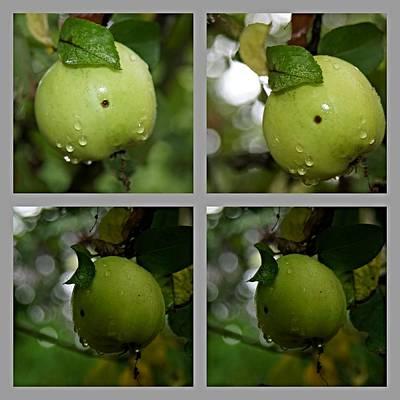 Fenster Digital Art - Frucht  by Klaas Hartz