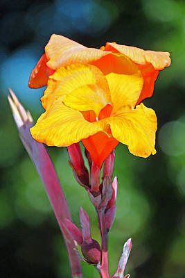 Canna Photograph - Fruit Sherbet by Suzanne Gaff