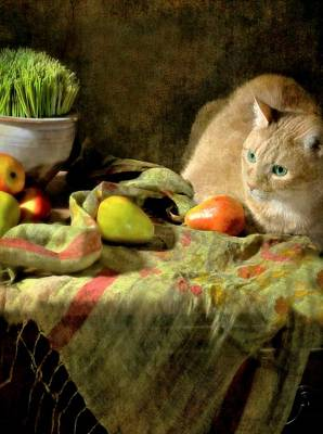 Orange Tabby Photograph - Fruitful Blessings by Diana Angstadt