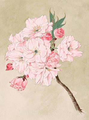 Japanese Painting - Fukurokuju - God Of Longevity - Vintage Watercolor by Just Eclectic