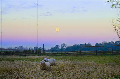 Sheep Digital Art - Full Moon And Sheep by Bill Cannon