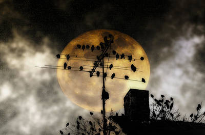 Moon Photograph - Full Moon Roost by Bill Cannon