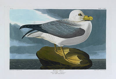 The Bird Photograph - Fulmar Petrel by British Library