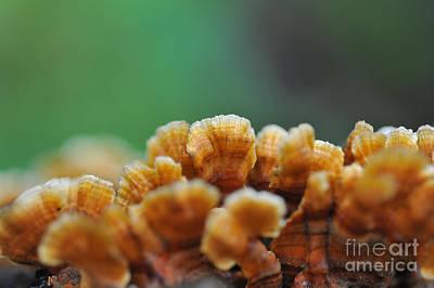 Fungus Growing On Log Print by Dan Friend