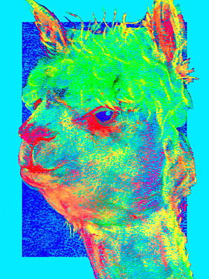 Multi Colored Painting - Funky Alpaca Baby by Sue Jacobi