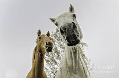 Funny Horses Original by Cindy Bryant