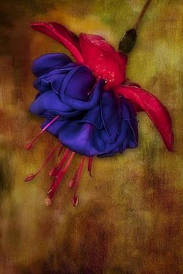 Fuschia Flower Print by Susan Candelario