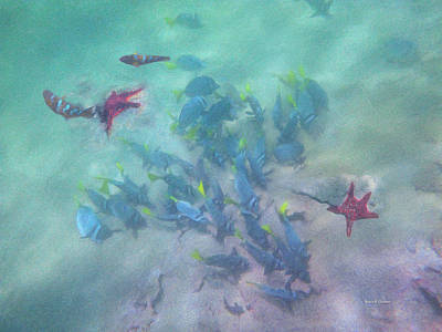 Scuba Painting - Galapagos Islands From Under Water by Angela A Stanton