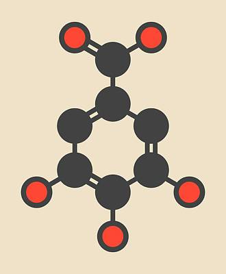 Gallic Acid Molecule Print by Molekuul